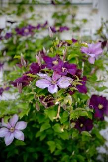 2. Stemningsbilde blomster