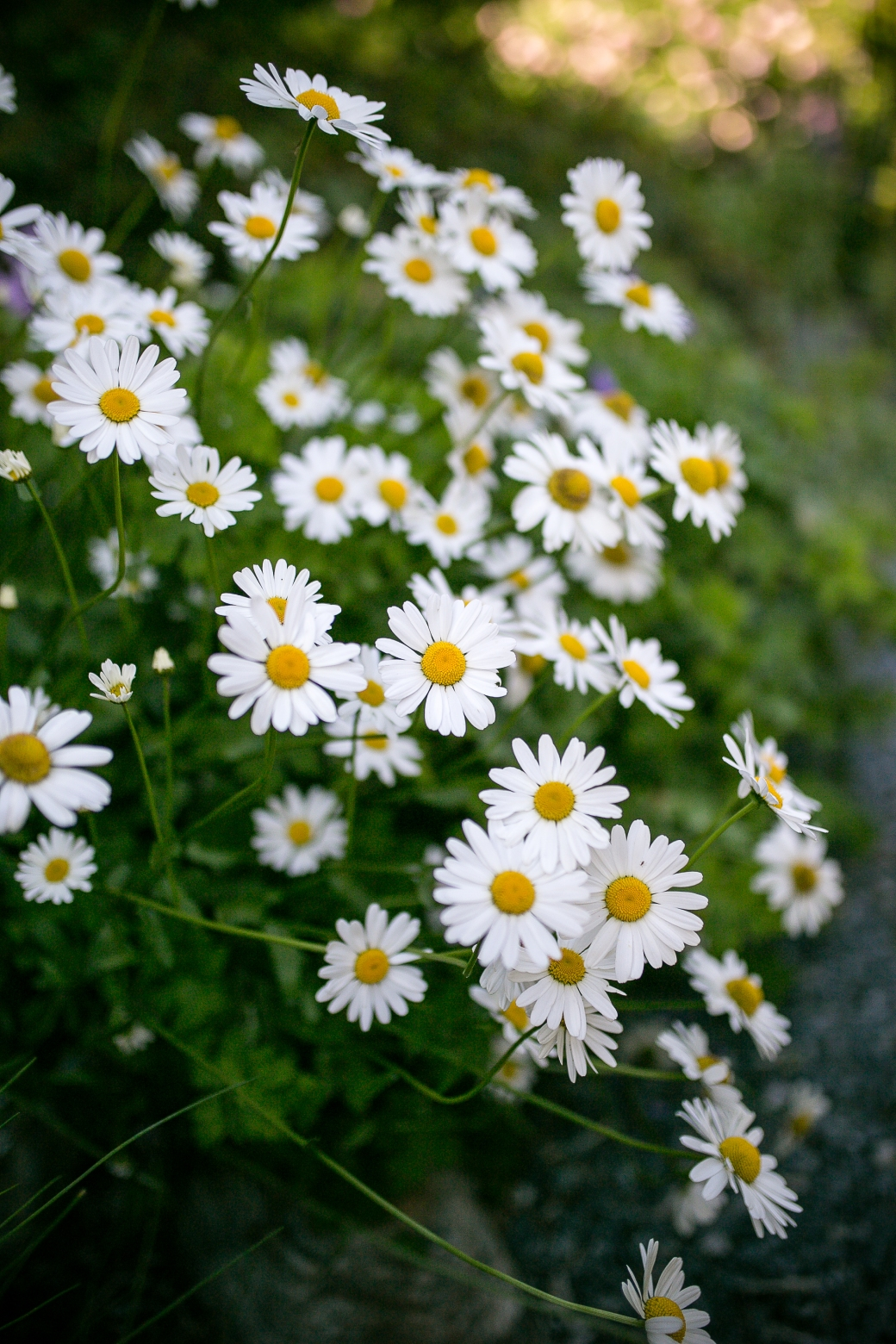 2. Stemningsbilde blomster2