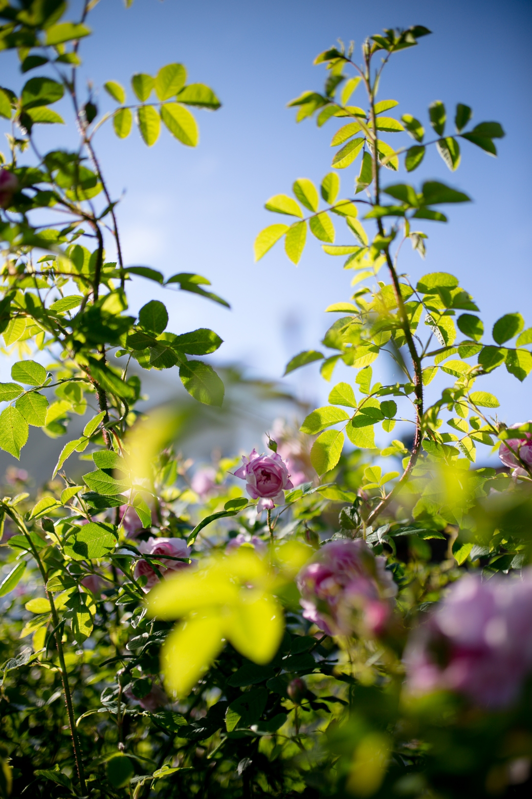 2. Stemningsbilde blomster3