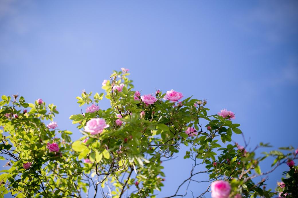 2. Stemningsbilde blomster4.jpg