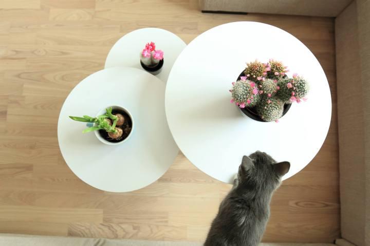 interiør og kattepus